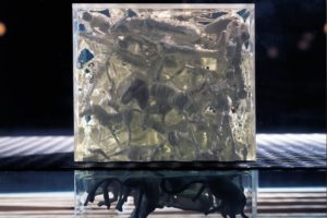 still lifes (detail view), glass case metal resin plexiglas finds wood, galerie benden & klimczak, cologne, germany 1999