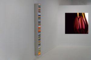 colour code + chromatic plant, edelstahl leuchtkasten mit dia und laserchrome auf aluminium dibond mit diasec face, galerie bernd a. lausberg, toronto, 2008